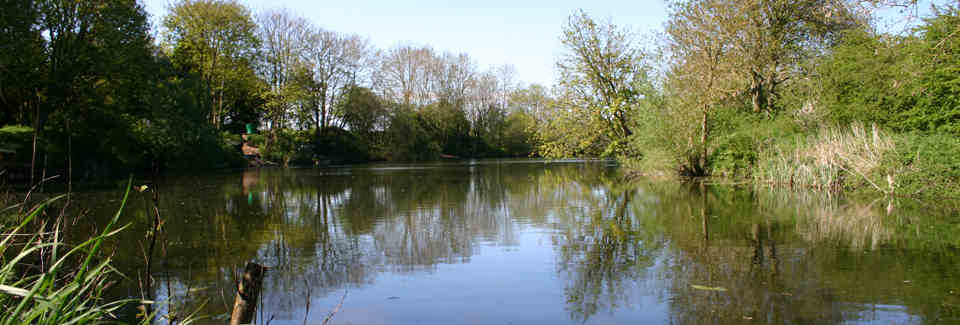 Emmotland Ponds - Pond 1
