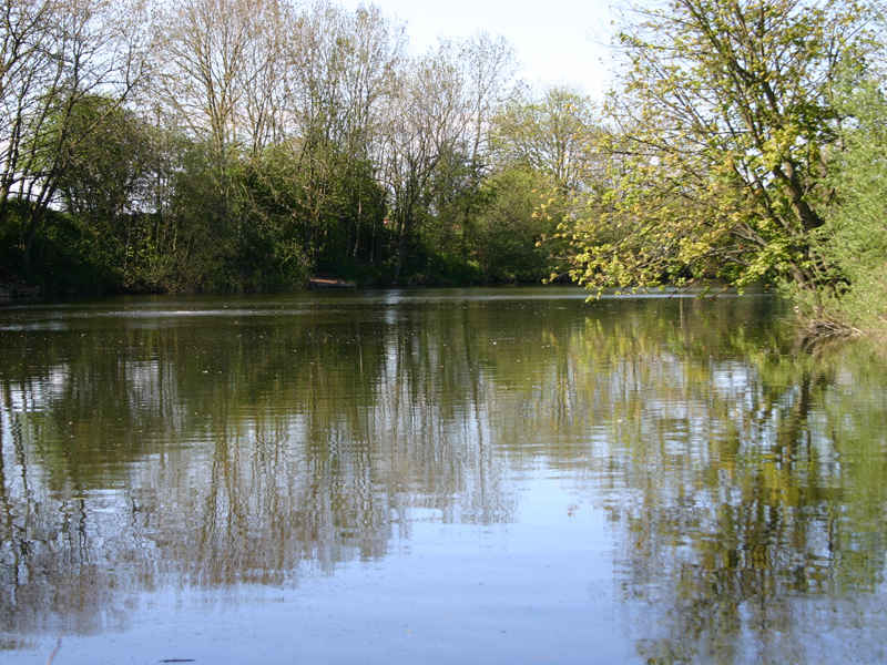 Pond 1 at Emmotland Fishery